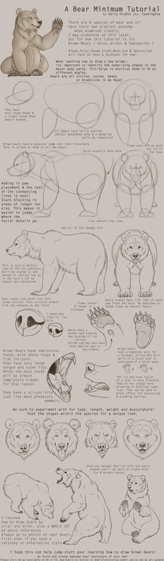 Brown Bear Tutorial by CunningFox.devian… on Related posts: Cat Faces [Tutorial] by TigerMoonCat. Animal Sketches, Animal Drawings, Drawing Sketches, Art Drawings, Drawing Animals, Drawing Tips, Drawing Ideas, Bear Sketch, Bear Drawing