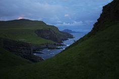 Wild sheep on Mykines, Faroe Islands