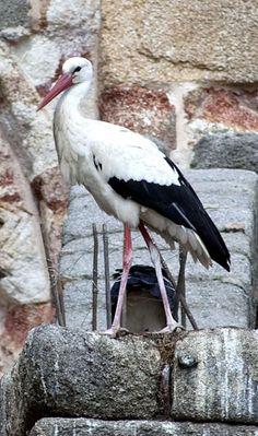 File:Stork on Avila cathedral flying buttress.jpg