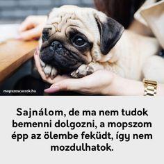 Mopsz szabályok - a békés együttélésért vagyis a mopsz kényelméért Pug Life, Animals, Minden, Animales, Animaux, Animal, Animais