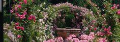Amoureux du jardin et de la rose, rendez-vous à l'Abbaye de Chaalis les 9, 10 et 11 juin 2017 !