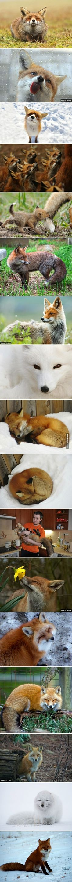 <3 little babies! How can anyone want to hunt such beautiful cute animals