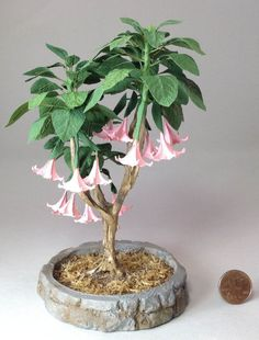 Dollhouse miniature 1/12th scale Pink  Angel's Trumpet tree by Mary Kinloch