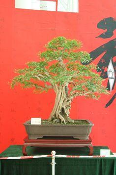 Guangdong Bonsai Exhibition - control -alt-delete your bonsai perceptions