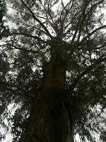 Luces y vistas, y árboles, en propiedad horizontal.