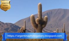 A virtual journey through the national parks of Argentina ( Los Cardones, protects cardon. Inca Empire, Small Shrubs, Central Valley, The Province, Listening To Music, Photo Galleries, National Parks, Journey, Gallery