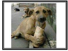 Perro callejero comiendo pan