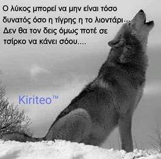 Great Words, Wise Words, Funny Greek, Wolf Quotes, Philosophy Quotes, Lone Wolf, Famous Last Words, Greek Quotes, Motivational Quotes