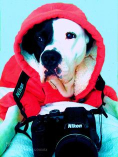Detective Privado ;-)) by Innessangel #animals #animal #pet #pets #animales #animallovers #photooftheday #amazing #picoftheday