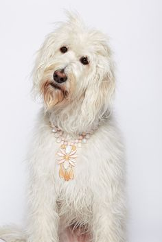 Teddy wearing an Irene Neuwirth Necklace
