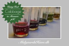 Natural pH indicator using red cabbage