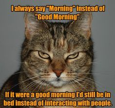 Lolcats - good morning - lol at funny cat memes - funny cat pictures Funny Shit, Funny Animal Memes, Funny Cute, Funny Animals, Cute Animals, Funny Memes, Animal Funnies, Hilarious Stuff, Funny Posts