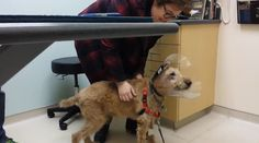Amazing Procedure Restores Dog's Eyesight – His Reaction Will Have You In Tears!