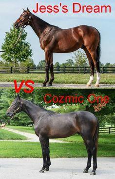 Jess's Dream (Curlin-Rachel Alexandra) vs. Cozmic Onr (Bernardini-Zenyatta) watch for these two in the 2015 Kentucky Derby. My money is on Cozmic One