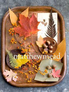 NEXT UP... Autumn!