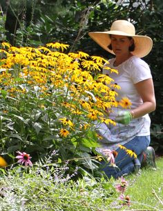 The Coastal Gardener's Top Ten Plants, I agree with her list, but would also add coneflowers to the list.