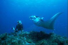 Des Maldives à l'Antarctique, la planète recelle de nombreux endroits parfaits pour la plongée sous-marine. Crédits photo: Pascal Kobeh