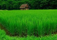 Green Wallpapers 23