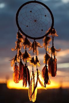 will hang a dream catcher from one of the tree branches