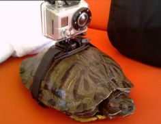 Camera on top of turtle