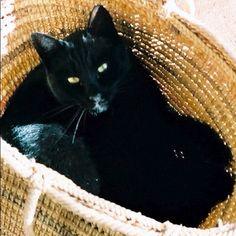 Kuro nekochan.23年生きたノエル、7歳のころ(=^ェ^=) #cat #Tokyo #japan  - @noel_izu- #webstagram