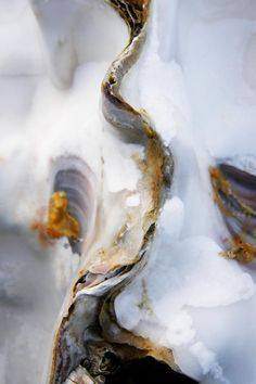 gorgeous oyster shell photograph by Richard George cool minimalist abstract contemporary art nature as the modern artist Painting Inspiration, Color Inspiration, Arte Yin Yang, Art Beauté, Oyster Shells, Sea Shells, Organic Shapes, Textures Patterns, Art Photography