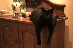 Cat glaring for more food. Funny story on Finslippy.com  blog.#Repin By:Pinterest++ for iPad#