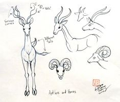 Draw Deer 3 by ~Diana-Huang on deviantART