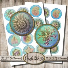 Your place to buy and sell all things handmade Printable Images, Sea Jewelry, Collage Sheet, Digital Collage, Sea Creatures, Starfish, Beetle, Sea Shells, Arts And Crafts