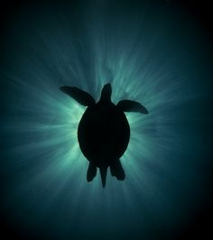 Image result for underwater sun rays