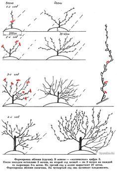 !!!!!!!формирующая обрезка груши и яблони Алтайский сад: устойчивый урожай при меньших усилиях