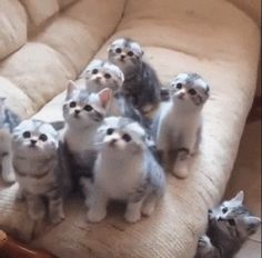Synced Kittens