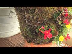 ▶ How to Make a Moss Hanging Garden Basket with Lisa - YouTube