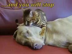 U hear nothing meow