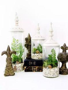 【创意盆栽】玻璃才是绿植最好的家