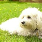Dog Care Recommendations and their Needs  Having pet in home is not an easy task. You need to take care of different aspects related to pet's care and needs. For example, you are required to take care of food, rest, entertainment, and exercise etc. The following …  [CLICK TO READ MORE]   The post  Dog Care Recommendations and their Needs  appeared first on   .  https://www.dogisto.com/dog-needs/