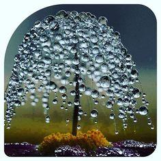 #nature #drops #water #dropsofwater #rain #капли #каплидождя #дождь #природа