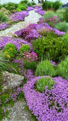 Secret garden design - Low growing bedding plants