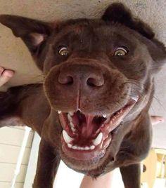 #smile #dog #humor #zoomalia