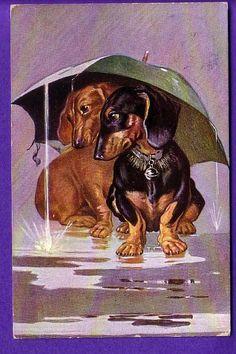 Luv My Dachshunds Vintage Dachshund, Dachshund Gifts, Dachshund Puppies, Dachshund Love, Happy Birthday Dachshund, Dog Jokes, Puppies And Kitties, Dog Portraits, Dog Art