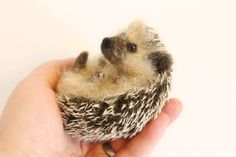 Needle felted Hedgehog by YvonnesWorkshop on Etsy