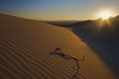 The Golden Dune-Kelso Dunes, California