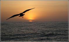 Taking wing...