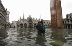 Venice Mayor Blames Climate Change As Italian City Inundated By Highest Tide In 50 Years: Dramatic photos and video captured in Venice this… Pictures Of Venice, Flood Barrier, Water Flood, Large Waves, Dramatic Photos, Gallery Of Modern Art, The Day Will Come, High Tide, Climate Change