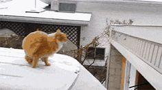 That determination