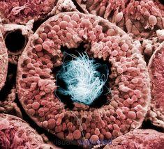 Las Mejores 490 Ideas De Fotografía Microscópica Fotografía Microscópica Microscopio Fotografia