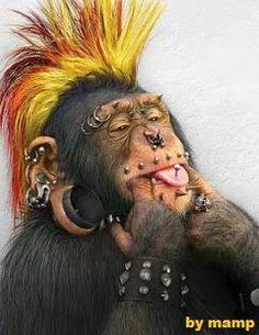 Funny chimpanzee pictures, Funny monkey photos and images Funny Monkey Pictures, Animal Pictures, Face Pictures, Weird Pictures, Animals And Pets, Funny Animals, Cute Animals, Animal Fun, Animals Images