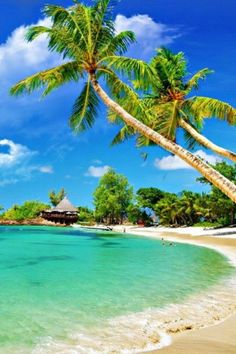 Radha Nagar Beach is a tourist destination situated in Andaman and Nicobar Islands. The beach is blessed with serene beauty, lush greenery and peaceful environment. #travel #india #beach #sand #sea #trees #life #beachlife # seashore  #