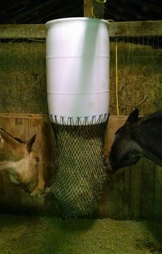 """My other DIY this weekend: slow feeder hay barrel in my run in shed. I used an extra large capacity extra small 1"""" hole net from Big D (these are awesome and cheap!). As pictured it is holding 5 flakes and is not even half full. It is super convenient, as I can throw hay in the top from the hay storage side of the barn. I'm also going to make some with lids for outside in the paddocks. Wish I would've done this sooner!"""