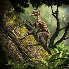 Epidendrosaurus ninchengensis. Art by Román García Mora.